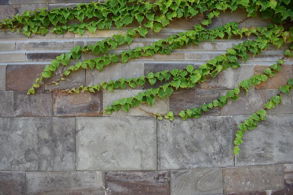 zeď s rostlinami